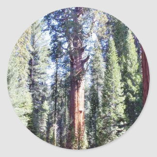 General Sherman Trees Forrests Pegatina Redonda