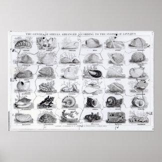 Géneros del rompecabezas de las cáscaras, pub. por póster