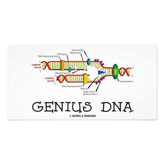 Genius DNA (DNA Replication Humor) Card