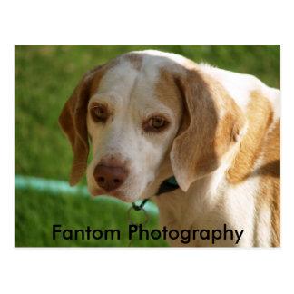 Genny Dog Postcard