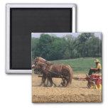Gente simple del país de Amish en el cultivo con Imán Cuadrado
