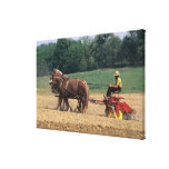 Gente simple del país de Amish en el cultivo con Lienzo Envuelto Para Galerias
