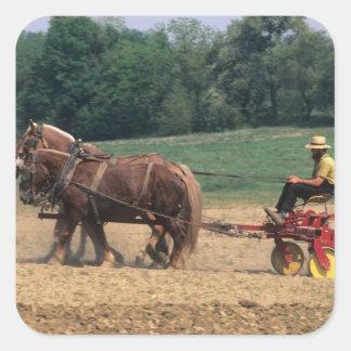Gente simple del país de Amish en el cultivo con Pegatina Cuadrada