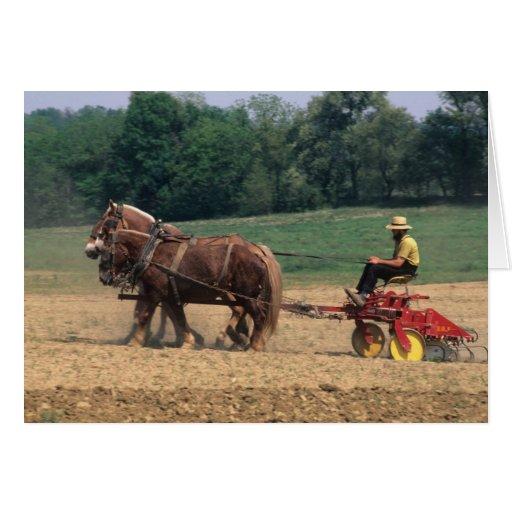 Gente simple del país de Amish en el cultivo con Felicitaciones