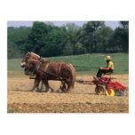 Gente simple del país de Amish en el cultivo con Postales