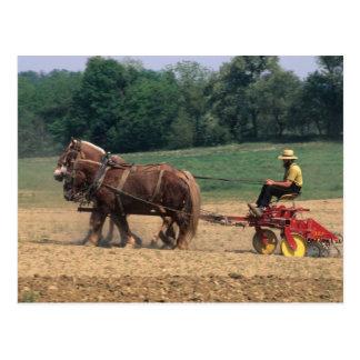 Gente simple del país de Amish en el cultivo con Tarjeta Postal