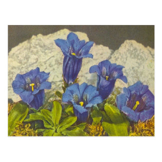 Gentian Flower Postcard
