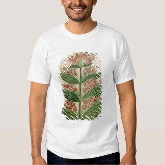 Gentian with imaginary flowers shirt