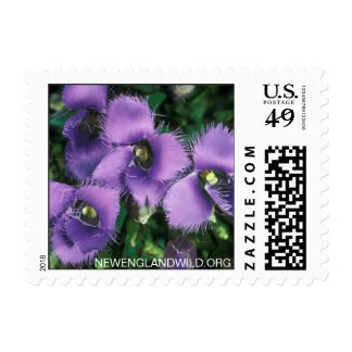 Gentianopsis crinita, greater fringed-gentian postage