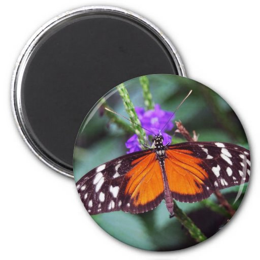 Gentle Butterfly open 2 Inch Round Magnet