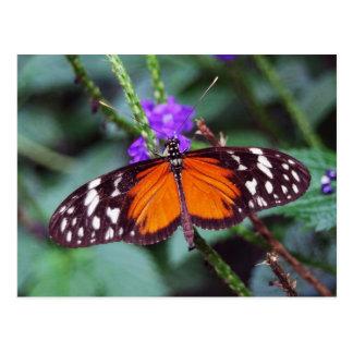 Gentle Butterfly open Postcard