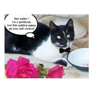 GENTLE CAT IN THE RESTAURANT Happy Birthday Postcard