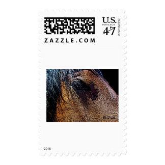 Gentle Eye Postage Stamp
