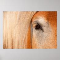 Gentle gaze - eye of a draft horse posters