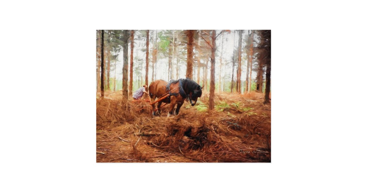 Gentle Giant Draft Horse At Work In The Forest Postcard