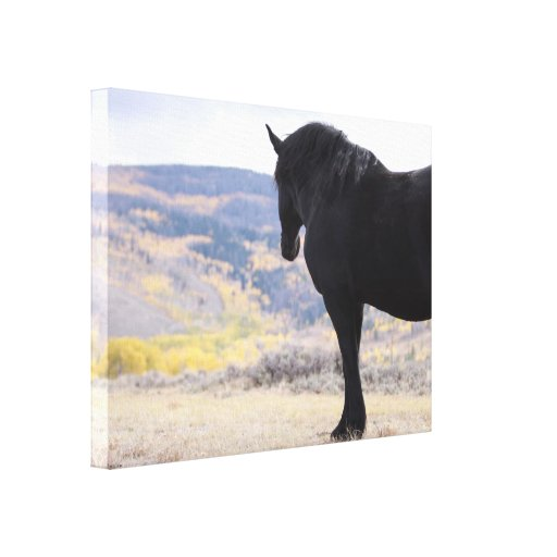 Gentle Giant Looks to the Rockies Canvas Print