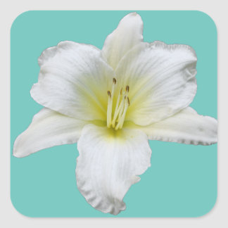 Gentle Lily - Daylily Square Sticker
