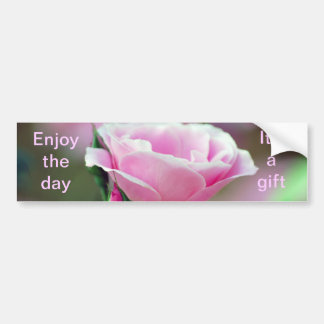 Gentle pink rose and rose buds bumper sticker