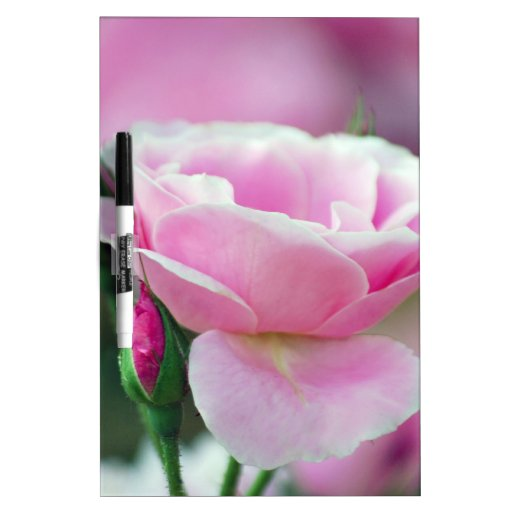 Gentle pink rose and rose buds dry erase boards