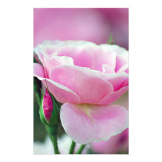 Gentle pink rose and rose buds stationery