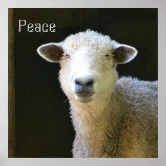 Gentle Sheep Poster