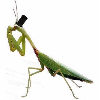 Gentleman Mantis Photo Sculptures