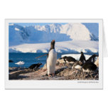 Gentoo Penguin at Dorian Bay Greeting Card