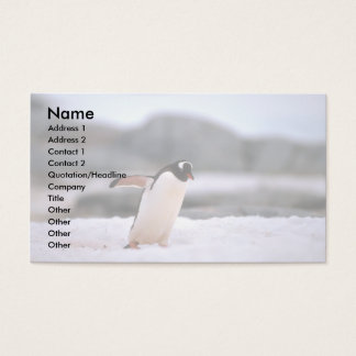 Gentoo Penguin Business Card