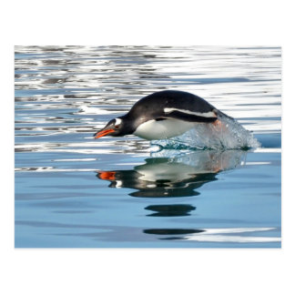 Gentoo Penguin Diving Postcard