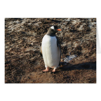 Gentoo penguin (HO) card