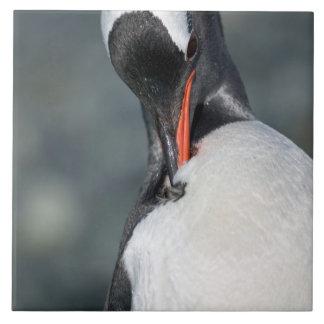 Gentoo Penguin in Neko Harbor Antarctica Tile