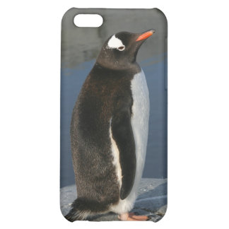 Gentoo Penguin Cover For iPhone 5C