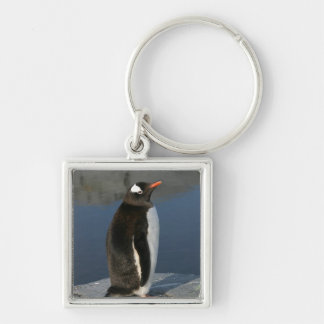 Gentoo Penguin Keychain