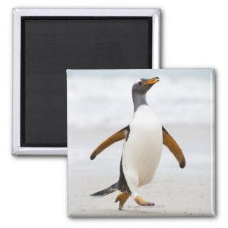 Gentoo Penguin Magnet