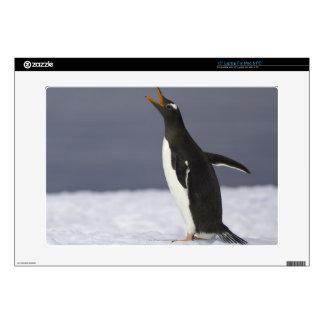 """Gentoo penguin (Pygoscelis papua) adult bird Decal For 15"""" Laptop"""