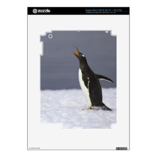 Gentoo penguin (Pygoscelis papua) adult bird iPad 3 Decal