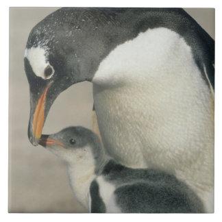 Gentoo Penguin, (Pygoscelis papua), adult Ceramic Tile