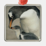 Gentoo Penguin, (Pygoscelis papua), adult Christmas Tree Ornaments