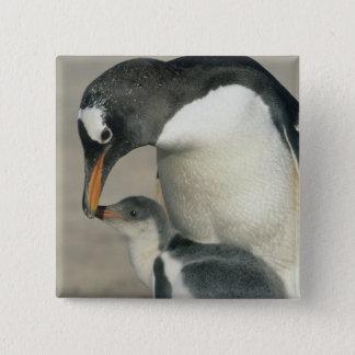 Gentoo Penguin, (Pygoscelis papua), adult Pinback Button