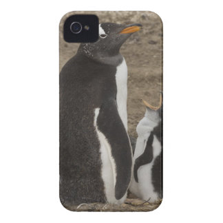 Gentoo Penguin (Pygoscelis papua) and chick iPhone 4 Case