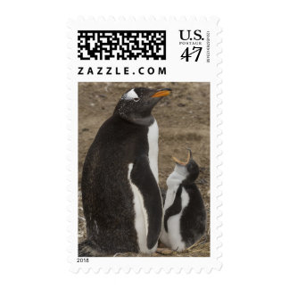 Gentoo Penguin (Pygoscelis papua) and chick Postage Stamp