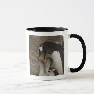 Gentoo Penguin (Pygoscelis papua) and chicks. 2 Mug