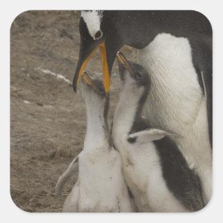 Gentoo Penguin (Pygoscelis papua) and chicks. 2 Square Sticker
