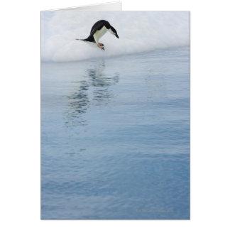 Gentoo penguin (Pygoscelis papua) Card
