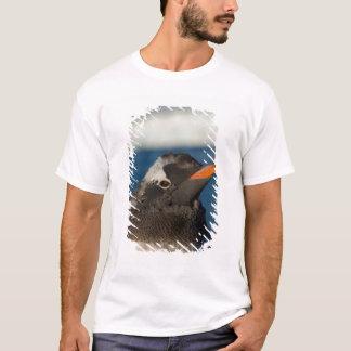 gentoo penguin, Pygoscelis Papua, chick along T-Shirt