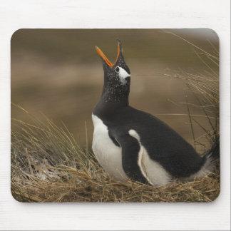 Gentoo Penguin (Pygoscelis papua) colony on the Mouse Pad
