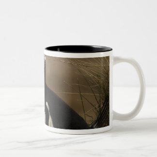 Gentoo Penguin (Pygoscelis papua) colony on the Two-Tone Coffee Mug