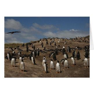 Gentoo Penguin (Pygoscelis papua) colony on West Card