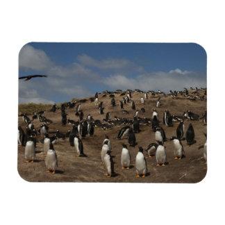 Gentoo Penguin (Pygoscelis papua) colony on West Magnet