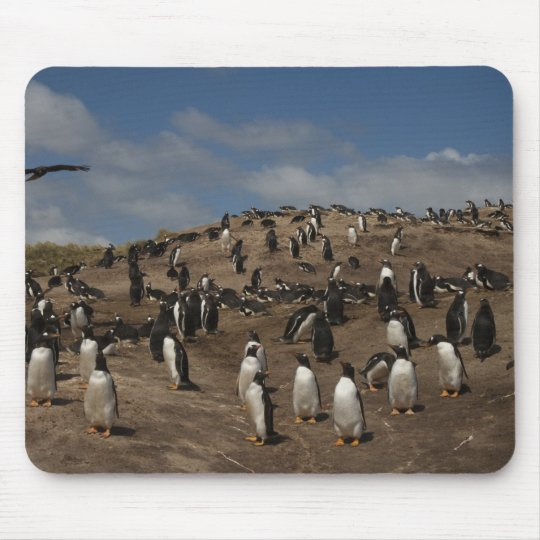 Gentoo Penguin (Pygoscelis papua) colony on West Mouse Pad